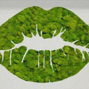 panouri pâsla îmbrăcate în licheni verde crud