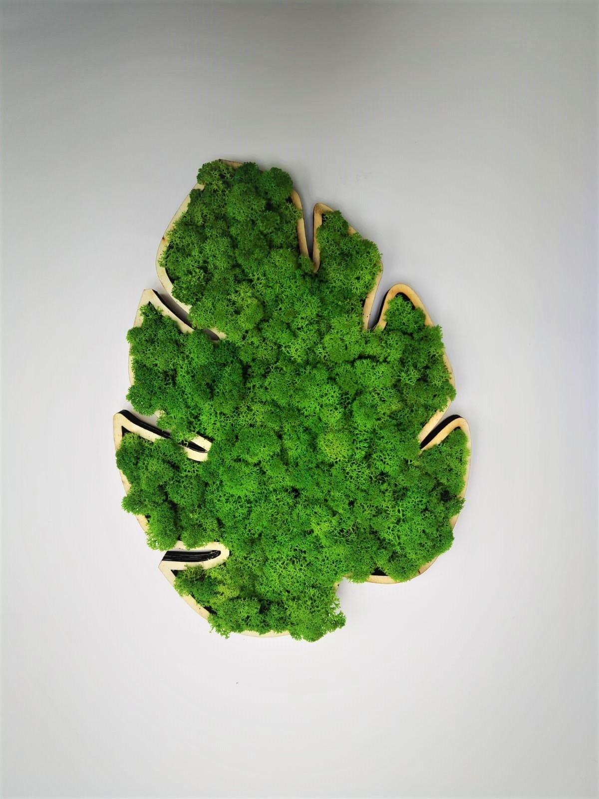 Decorațiune Frunză Monstera cu Licheni